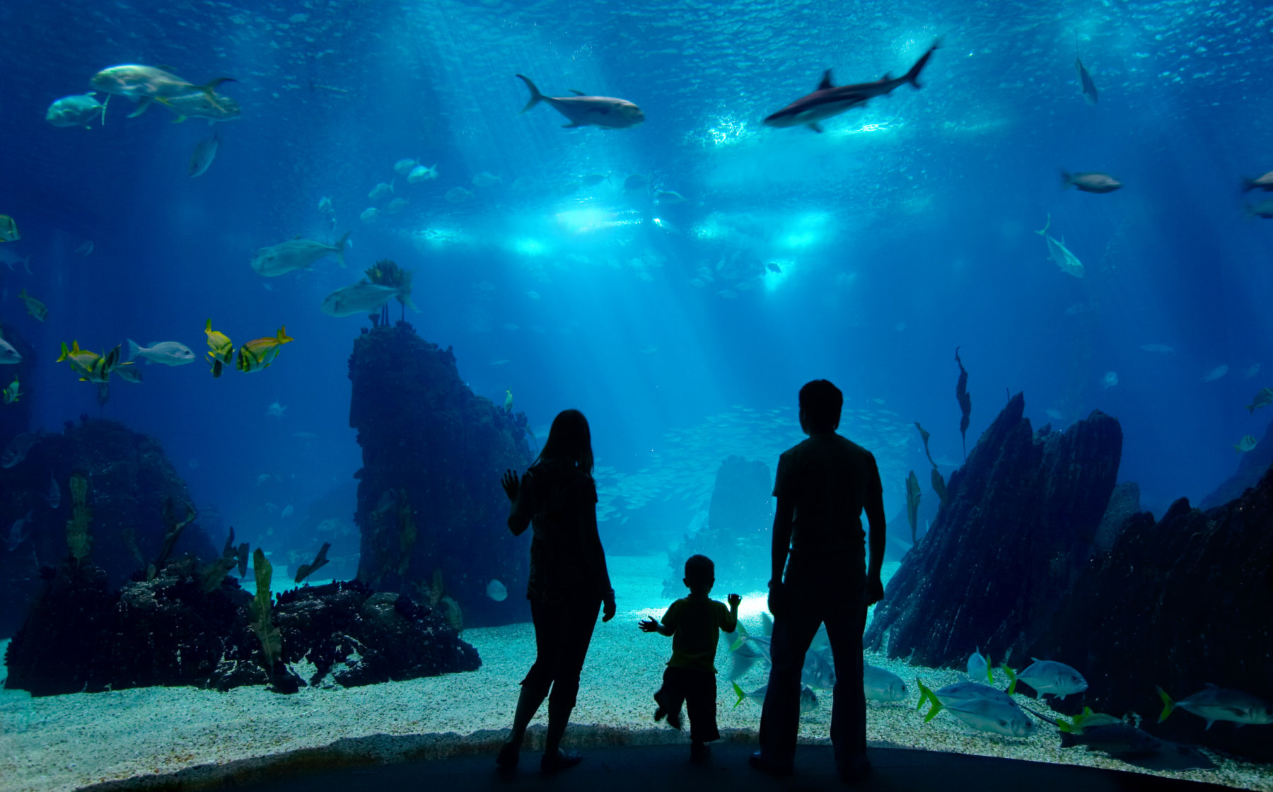 Underwater family. Silhouettes of young family of three enjoying views of underwater life. Family having free time in Oceanarium.